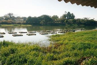 Epamig analisa cadeia produtiva da piscicultura e qualidade da água no Reservatório de Três Marias