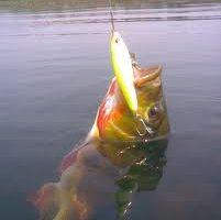 pesca peixe dourado