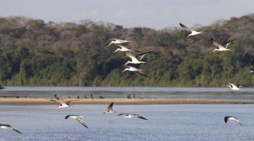 Pesquisadores podem ter encontrado nova espécie de peixe no Pantanal