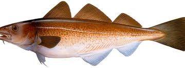 Peixes mais consumidos na época da páscoa