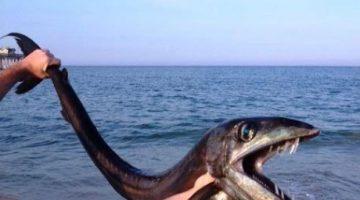Raro peixe-cavalo é flagrado nos EUA
