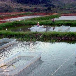 Aquicultura sustentável, uma opção para a segurança alimentar