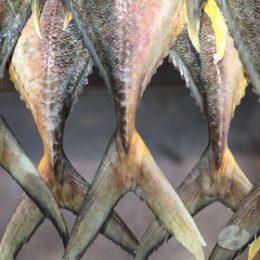 Governo endurece controle de comércio de pescado