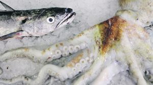 O mar em catálogo para chamar os peixes pelos nomes