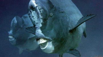 Peixe que come corais causa polêmica científica