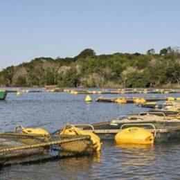 Ministro da Pesca assina convênio para construção de Mercado do Peixe