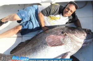 Grupo de amigos fisga peixe de 175 kg e quase 2 m na baía de Guanabara