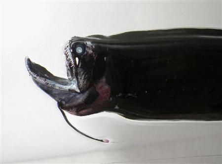 Catástrofe Chegando? Peixes pescados no Japão podem revelar algo assustador.