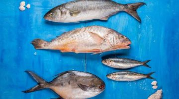 Conheça os quatro peixes em alta do litoral catarinense e seus usos na cozinha