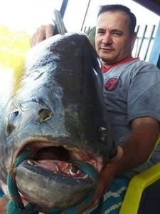 Em MT, pescador fisga peixe com mais de 38 kg no Rio Teles Pires