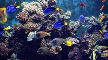 MPA simplifica transporte de peixes ornamentais