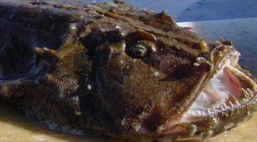 Cientistas fazem imagens raras de peixe no fundo do mar