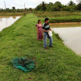 Produtores destacam fartura na produção de pescados