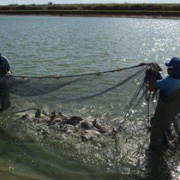 Petrobras anuncia biodiesel a partir de óleo de peixe