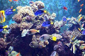 Trânsito de organismos aquáticos ornamentais será desburocratizado
