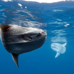 Estudo diz que peixes terão que migrar se temperatura global subir