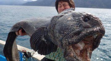 Pescadores acreditam ter fisgado peixe mutante afetado por acidente em Fukushima