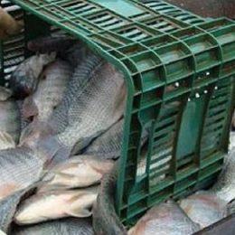 Hoje, Brasil não sabe quanto custa produzir pescado no País