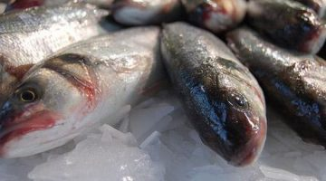 Brasil pode duplicar produção de pescado em cinco anos com aposta em sustentabilidade