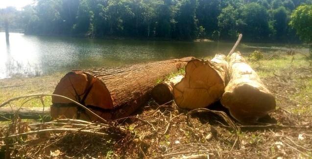 Estudo associa desmatamento e produtividade da pesca