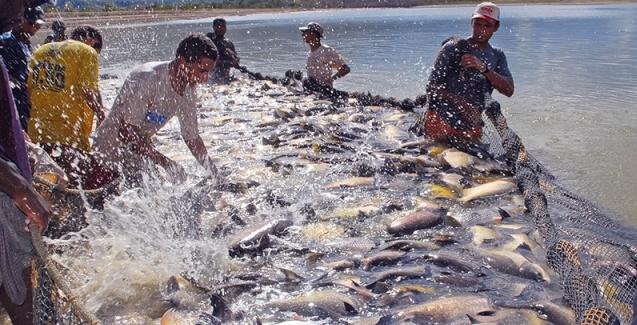 Suspensão da venda de pescado para as redes Assaí e Walmart em SP impacta piscicultura