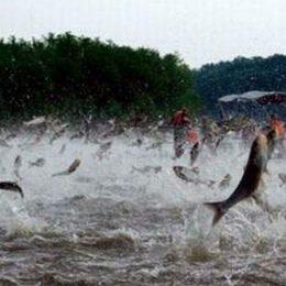 Piracema em Mato Grosso acaba dia 29 e Sema se reúne com pescadores