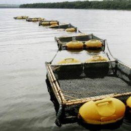 Primeiro workshop sobre piscicultura quer fomentar a produção local