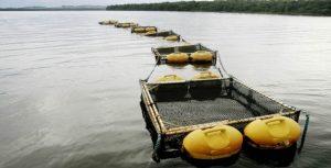 Parques aquícolas de Cana Brava, em Goiás, recebem licença ambiental