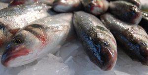 Brasil pode ser autossuficiente e grande exportador de pescado, diz presidente da Embrapa