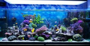 Demanda por Aquarismo cresce no Brasil