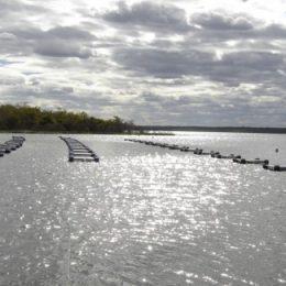 Secretaria de Agricultura firma convênio com DNOCS e beneficia piscicultores