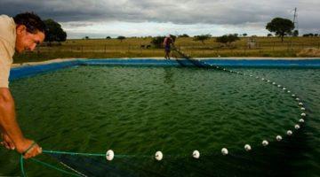Instituto de Pesca irá difundir a pesquisa científica ao pequeno produtor