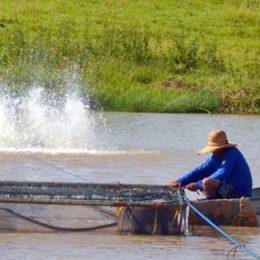 Sanidade na produção de peixes será tema de curso em São José do Rio Preto
