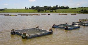 Produção Aquícola recebe incentivo para regularização em Minas Gerais