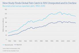 Sobrepesca atinge um terço do estoque mundial de peixes