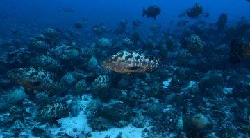 Governo libera pesca de peixes que integram lista de extinção