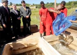 detentos fazendo depesca