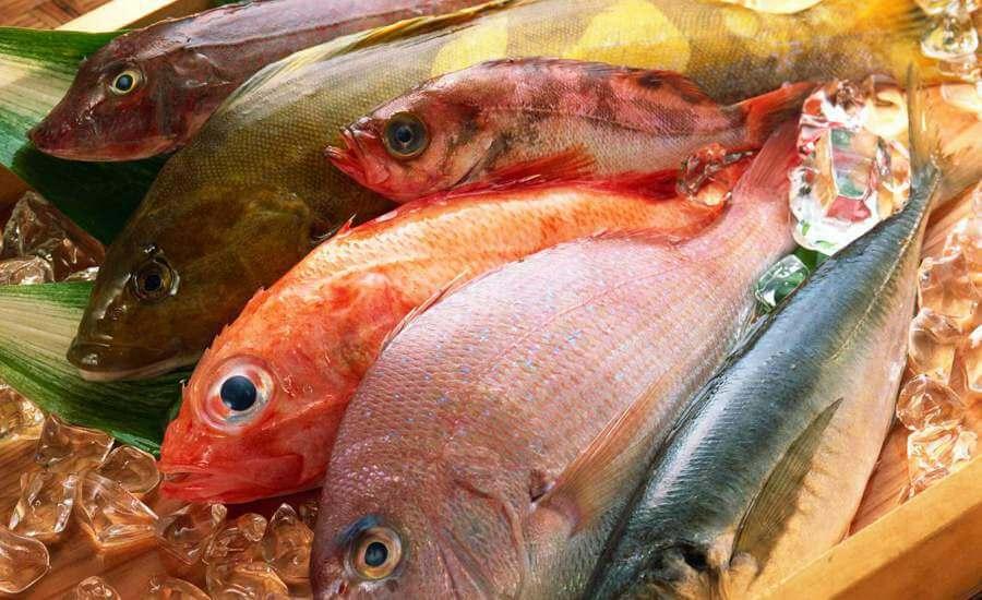Consumir peixes regularmente proporciona uma alimentação saudável e rica em proteínas (Foto: 51 WALL)