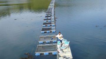 Debate discute produção e mercado de peixes nativos em tanque