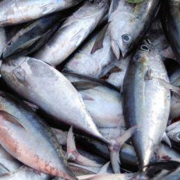 Fiscais fazem operação nacional para combater fraude em pescados