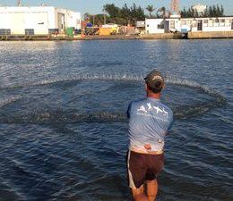 Botos ajudam pescadores na captura de peixes em Tramandaí, no RS