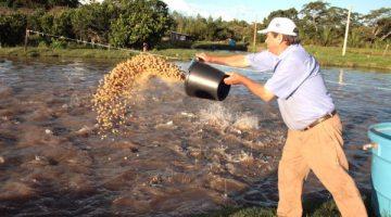 Saída da piscicultura do MAPA é péssimo para o setor, reclama entidade