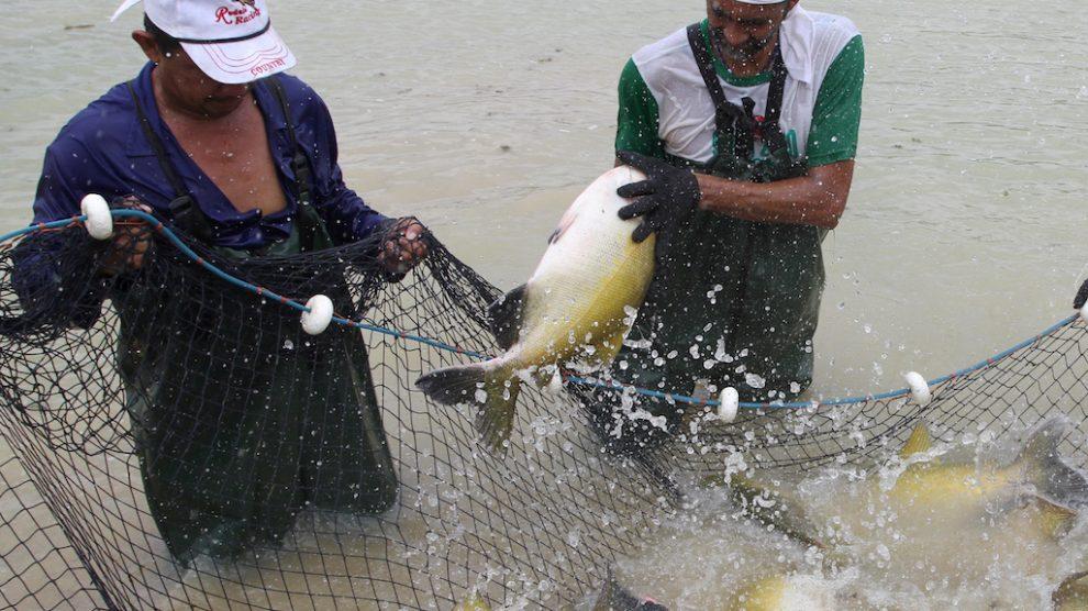Nortão: entreposto será adequado para que piscicultores voltem a vender peixes para outros Estados