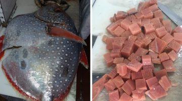 Peixe de raro sangue-quente achado em SP é vendido: 'Muito saboroso'